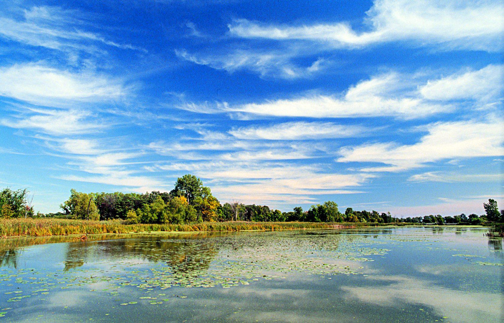 Hillman marsh