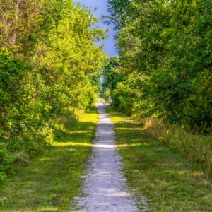 Gravel trail through forested area