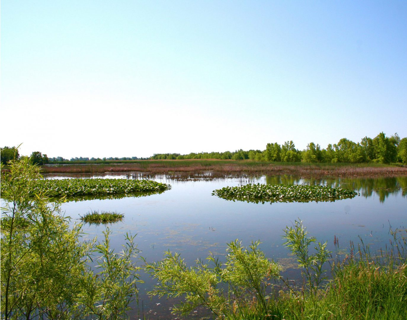 Marsh with forested background