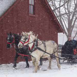 Horsedrawn carriage being pulled past John R Park Homestead