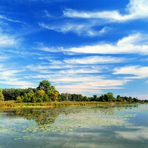 Hillman marsh with bright blue sky