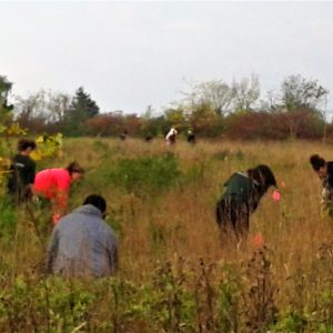 Volunteers planting trees in a grassy field