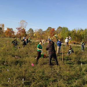 Volunteers planting trees in a field