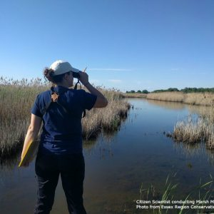 ERCA employee looking through binoculars while standing in a marsh.