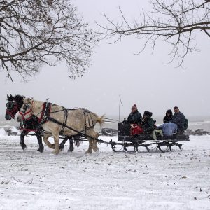 horses pulling a sleigh in the snow at the Homestead