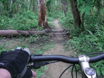 A point-of-veiw image of a biker riding on a conservation trail, looking over the handlebars