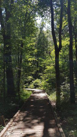 Kopegaron Woods Trail boardwalk below the trees