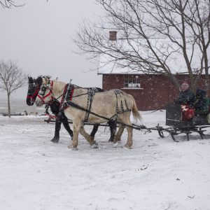 a pair of horses pulling a sleigh