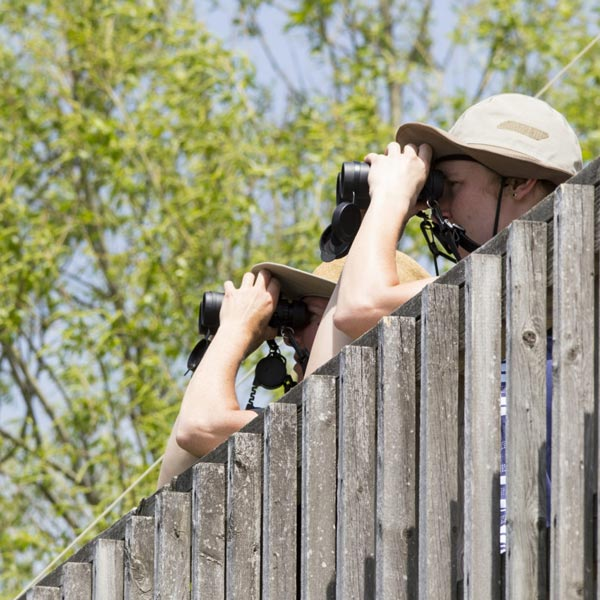 birders-looking-through-binoculars