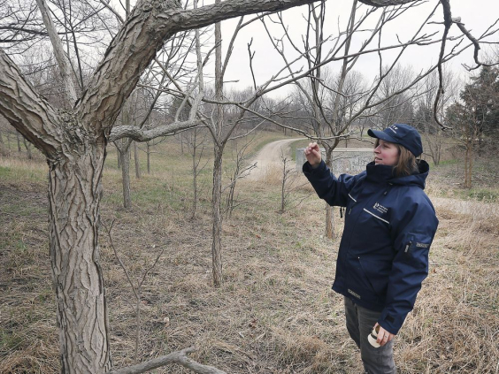 ERCA staff inspects a tree in winter