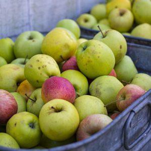 apples in metal buckets